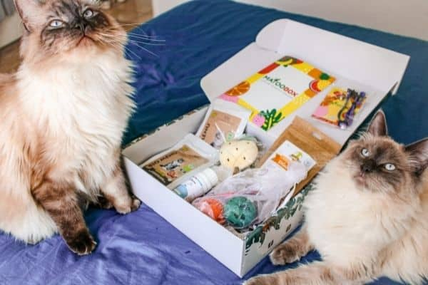 box-anniversaire-chat