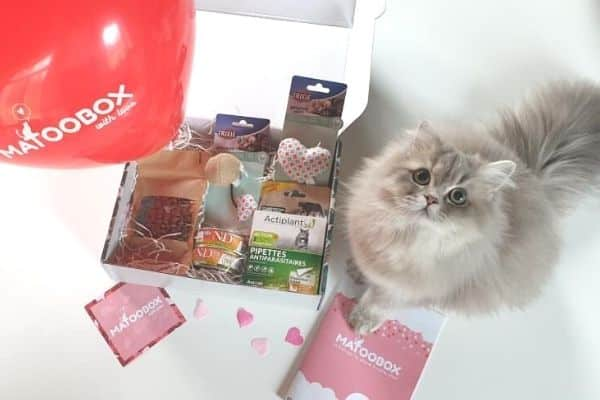 Saint-Valentin-chat