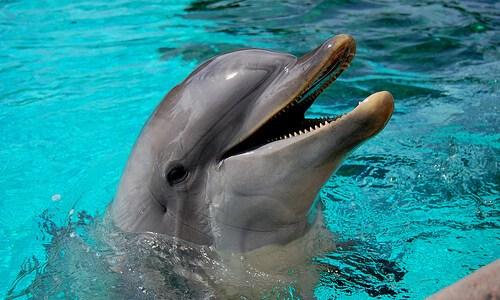イルカの赤ちゃんが想像以上に可愛い