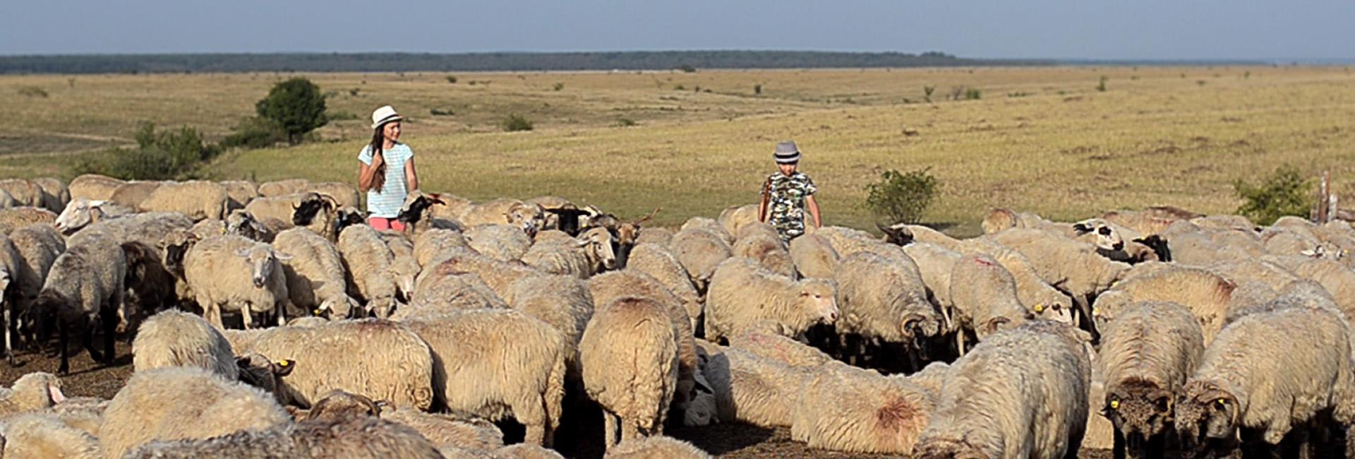 Copiii care ţin România oile tradiţia Crişana slider