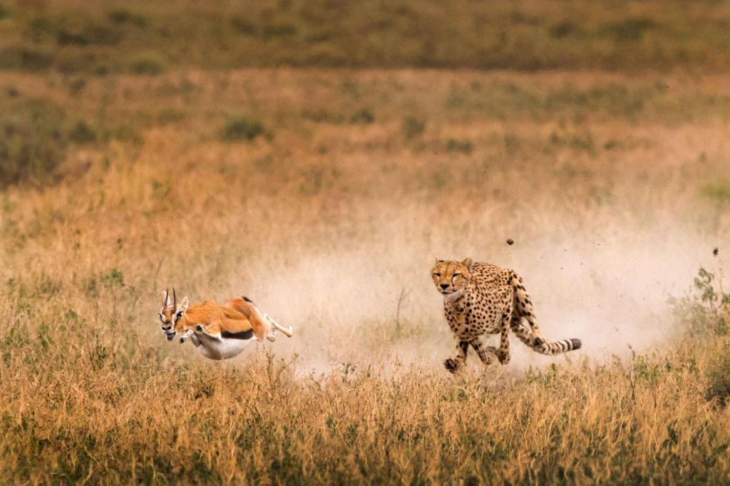 The Cheetah Trading Style