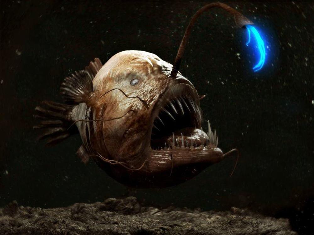 Seksualni parazitizam dubinske grdobine