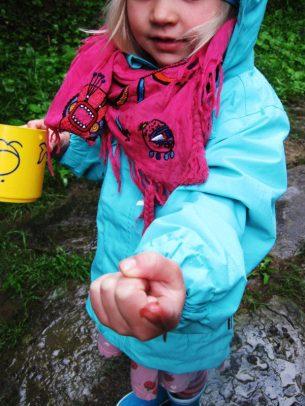 Regenwürmer und Schnecken