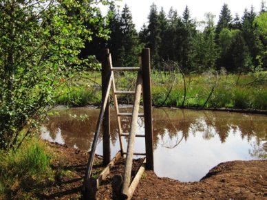 Moorbecken Einstieg