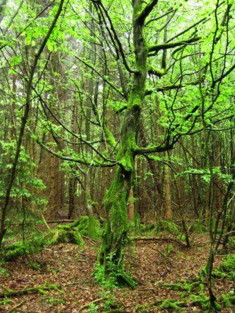 Ursprüngliche und wilde Flora