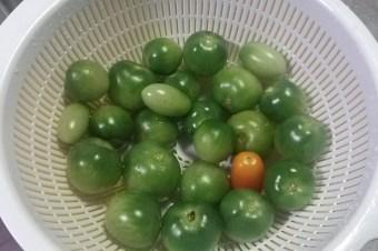 固定概念に縛られちゃだめ!トマトは青くても食べられる。