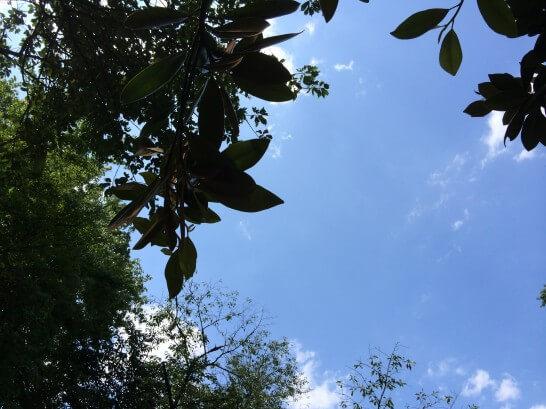 井の頭公園の青空