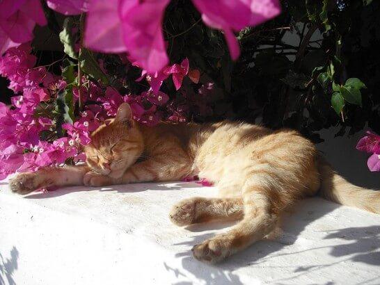 日差しの下で寝そべる猫