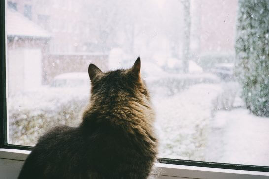 窓の外の雪景色を眺める猫