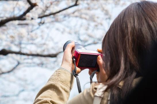 桜の写真を撮影する女性