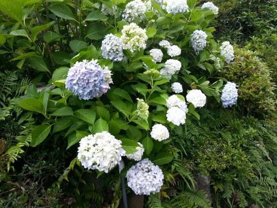界伊東の日本庭園の花