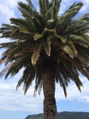 界 伊東の近くの木