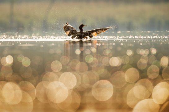 鳥 (1)