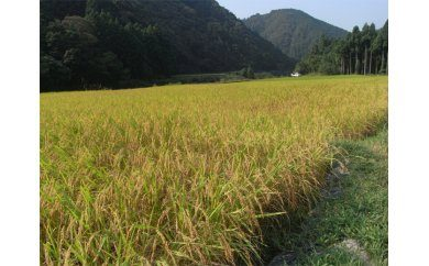 高知県 室戸市の畑
