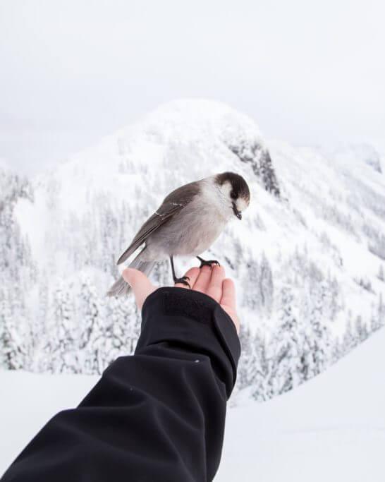 雪景色と鳥
