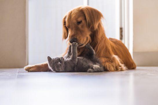 たわむれる犬と猫