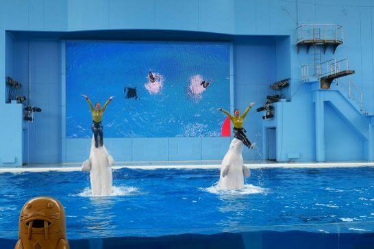 八景島シーパラダイスのショー5