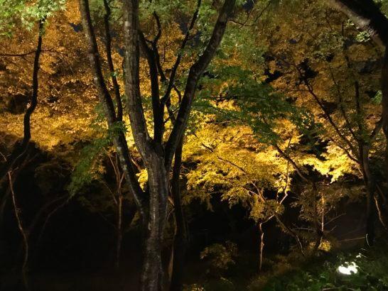 夜の清水寺(アメックスの夜間参拝イベント) の紅葉