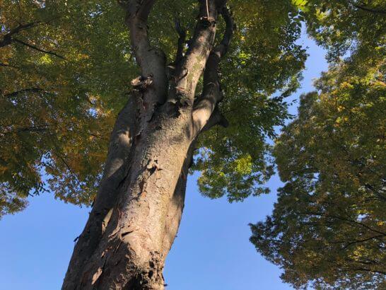 iPhone Xで撮影した木の写真