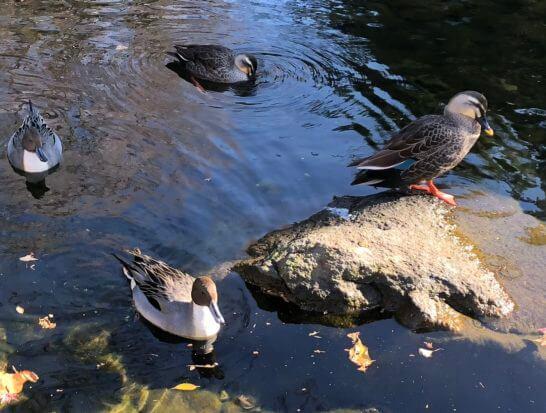高円寺の公園の鳥