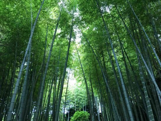 ヒルトン小田原の竹林
