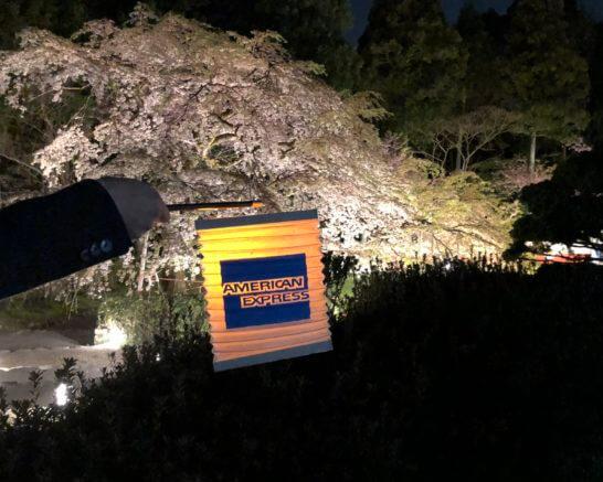 アメックスのぼんぼりと醍醐寺の桜