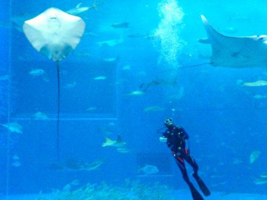 美ら海水族館の水槽