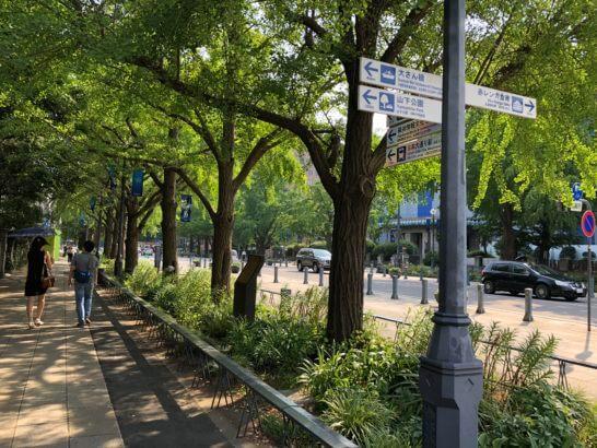 横浜の街路樹
