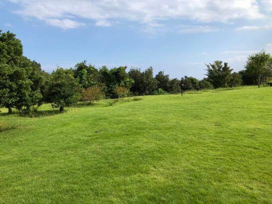 ヒルトン小田原の敷地の緑