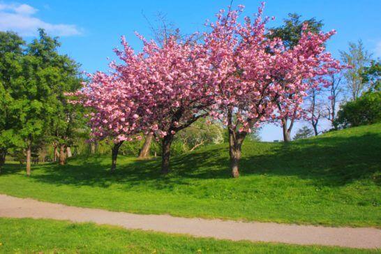 札幌の中島公園 (春)