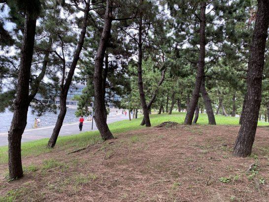 インターコンチネンタル横浜Pier8に向かう道