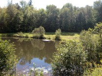 The Pond at Cardigan Lodge