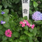 長谷寺の紫陽花の整理券があっても大丈夫?平日の混雑や待ち時間