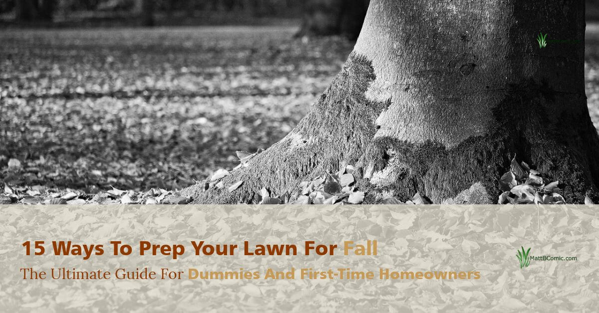 Fall Lawn Maintenance Tips For Beginners {2019}