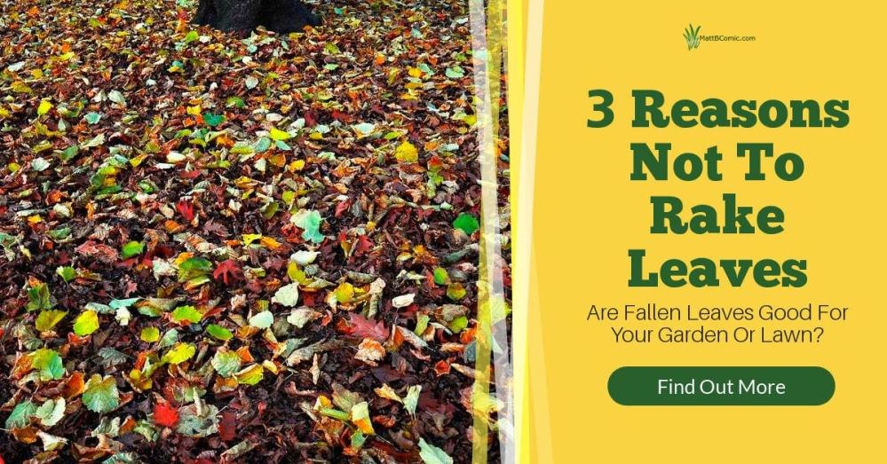 Why Should You Not Rake Your Leaves Featured Image