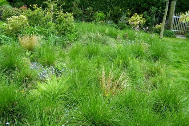 Short Tufted grass