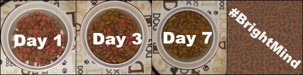 Transition to Purina Pro Plan #BrightMind #ad