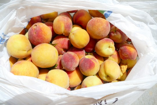Petaluma River peaches