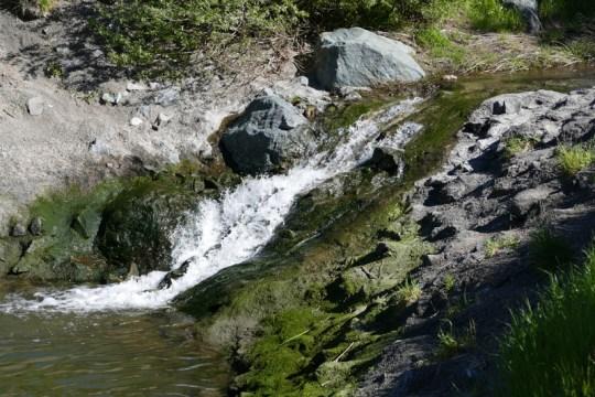 Lynch Creek mouth, April 2016