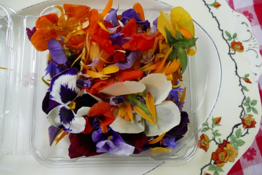 edible flower garnish
