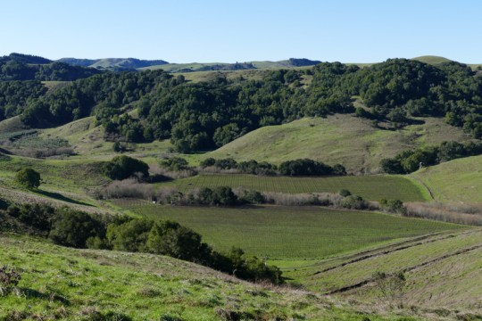 west of Petaluma