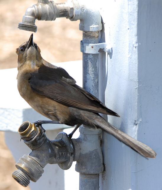 uccello acqua