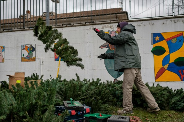 "A man is seen busy preparing a Christmas tree at the municipal park of P.G. Minozzi. Amatrice, Italy 2016. © Matteo Bastianelli for ""La Stampa"""
