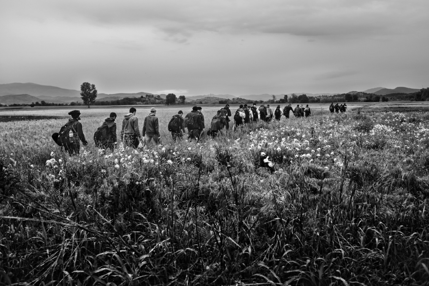 A column of Syrian asylum seekers on the way through cultivated fields about a kilometer from the border between Greece and FYROM. Evzoni, Greece 2015. © Matteo Bastianelli