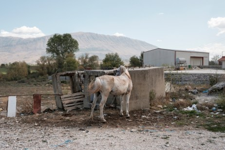 A horse on the side of a road in Lazarat. The village was known as the European capital of cannabis until 2014, when a major raid carried out by the Albanian government destroyed the local production and trafficking. Lazarat, Albania 2017. © Matteo Bastianelli