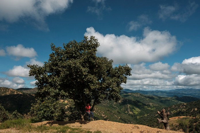 A kid is seen seated under the shadow of a tree, in the background a view of the mountainous area around Temalakatzingo, Mexico 2019. © Matteo Bastianelli