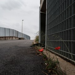 Two poppies on the roadside in the vicinity of a makeshift shelter outside the Roma Tiburtina railway station. Rome, Italy, April 2020. © Matteo Bastianelli/National Geographic Society Covid-19 Emergency Fund