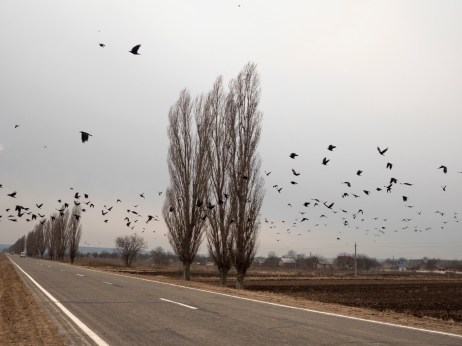 A flock of birds fly over the land on the border between Transnistria and Moldova, 2014. © Matteo Bastianelli
