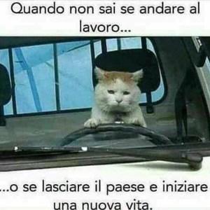 """Immagine di un gatto al lavoro dalla pagina Facebook """"Frasi Bellissime"""""""