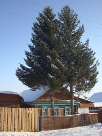 Companion trees